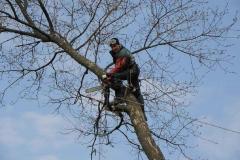 Спил, опиловка, расчистка деревьев, кустарника (1)