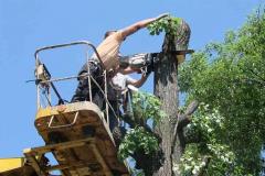 Спил, опиловка, расчистка деревьев, кустарника (2)