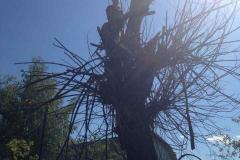 Спил, опиловка, расчистка деревьев, кустарника (3)