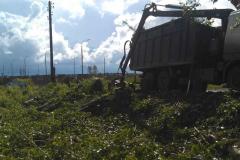 Спил, опиловка, расчистка деревьев, кустарника (4)