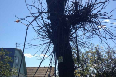 Спил, опиловка, расчистка деревьев, кустарника (5)